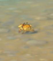 kraby-v-genshin-impact-19